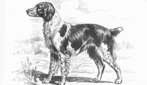 History of the Brittany Spaniel